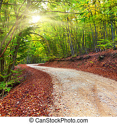 herbst wald, nroad