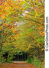 herbst wald, spur