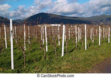 herbst, wineyards