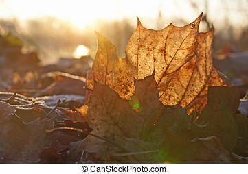 Herbst/autumn - Ein trockenes Blatt, durch das Licht f?llt/A...