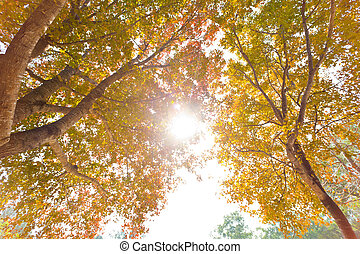 herbstbäume, hintergrund