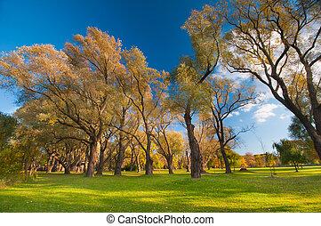 herbstlich, bäume, landschaftsbild