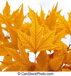 herbstlich, leaves.
