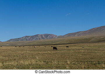 pasture in the mountains of Kazakhstan