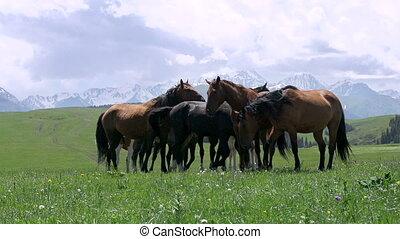 Herd in the Picturesque Foothills - Herd of horses grazing...