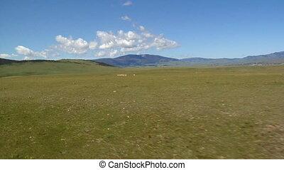 Herd of antelope run across field