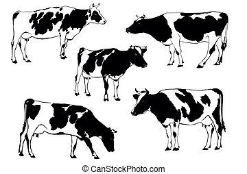 cow - herd of cows