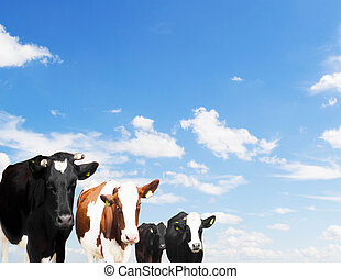 herd of cows on a background of blue sky