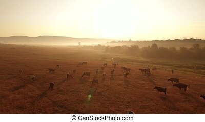 Herd of cows on sunlit pasture. Rural mountains landscape with cattle on pasture in the evening. Picturesque countryside view.