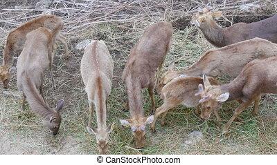 Herd of deer grazing in the forest - A herd of deer grazing...