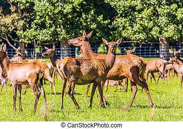 Herd of deer grazing on a lawn
