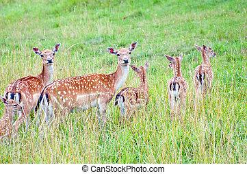 Herd of Deers