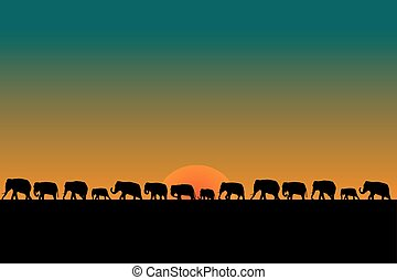 Herd of elephants at sunset