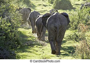 Herd of elephants walking up a hill