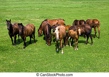 Herd of horses - A quantity of the horses standing together ...