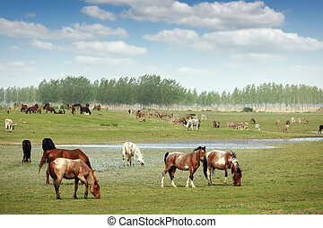 herd of horses and others farm animals in field in spring landscape