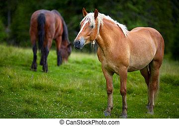 Herd of horses grazing