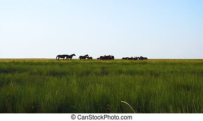 herd of horses - herd horses on the pasture at the steppe...