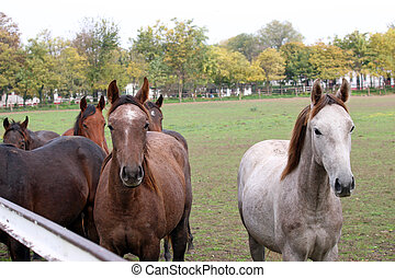 herd of horses in corral on farm
