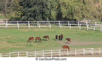 herd of horses in corral on ranch