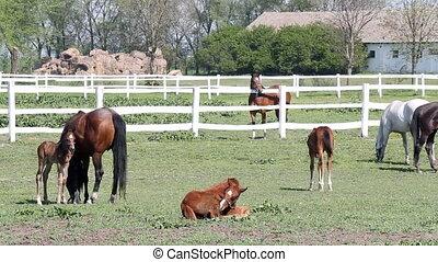 herd of horses in corral ranch scene