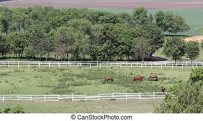 herd of horses in corral