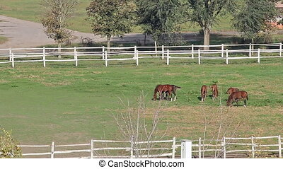 herd of horses in corral