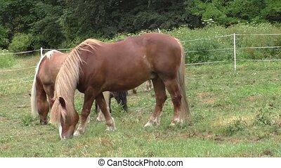 Herd of horses in green pasture