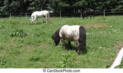 Herd of horses in green pasture