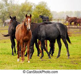 herd of horses in pasture