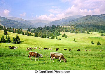 Carpathian Mountains - herd of horses in the Carpathian...