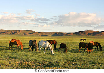 Herd of horses in the mongolian prairie