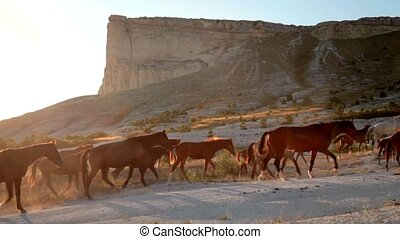 A herd of wild horses in the mountains. White Rock, Crimea, Ukraine
