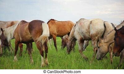 Herd of horses in the pasture