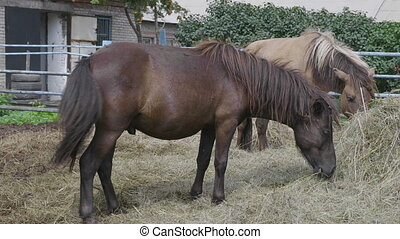 Herd of horses on a farm near a haystack.