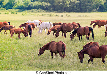 Herd of horses on field