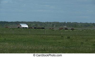 Herd of horses on meadow
