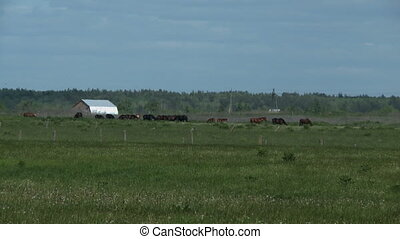 Herd of horses on meadow