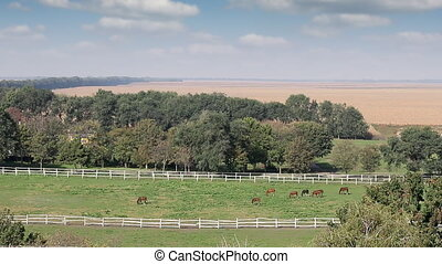 herd of horses on pasture landscape