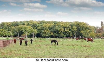 herd of  horses on pasture rural landscape