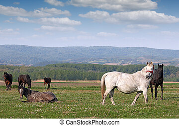 herd of horses on pasture