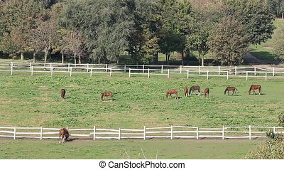 herd of horses on ranch