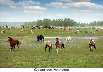 herd of horses on the pasture landscape