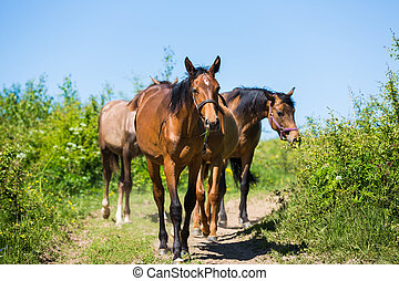 Herd of horses on the path
