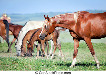 Herd of horses outdoor at pasture