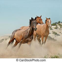 Herd of horses run in prairies
