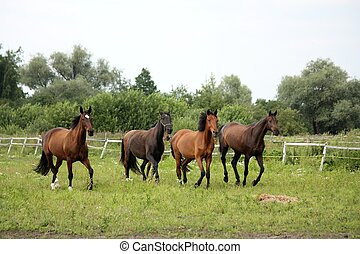 Herd of horses running free at pasture in summer