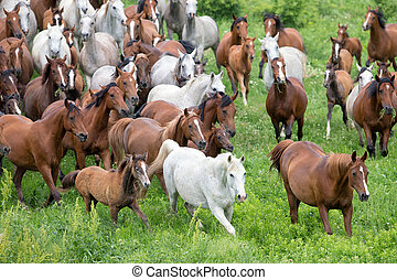 Herd of horses running in field