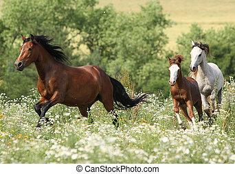 Herd of horses running in flowers