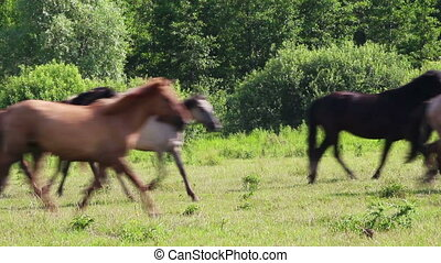 herd of horses running on pasture